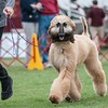 35th Annual Moore County Kennel Club All-Breed Dog Show