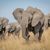 Mara Elephant Family - 2