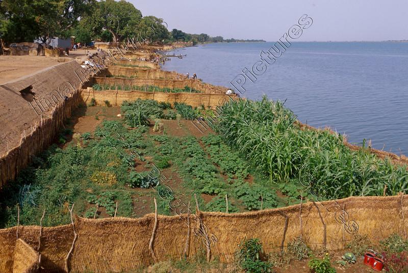 Vegetable garden,groententuin,jardin des légumes,Segou