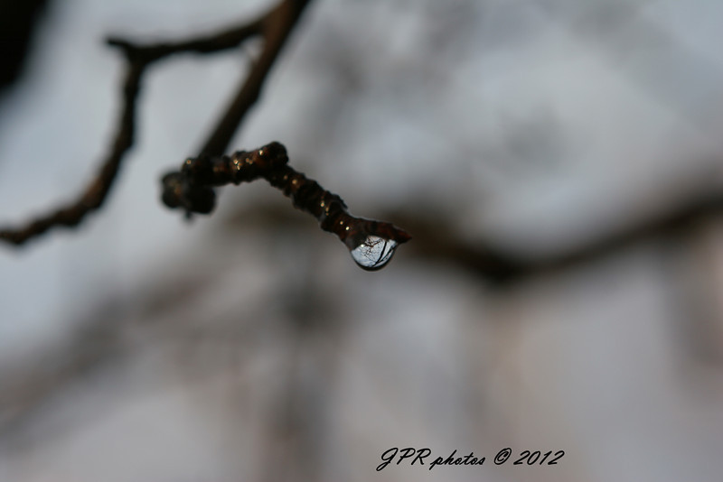 Macro Drops on Branch 014