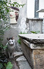 3 April 2014: one of the many stray cats living in Athens, in this case in the upscale Dexameni neighbourhood.