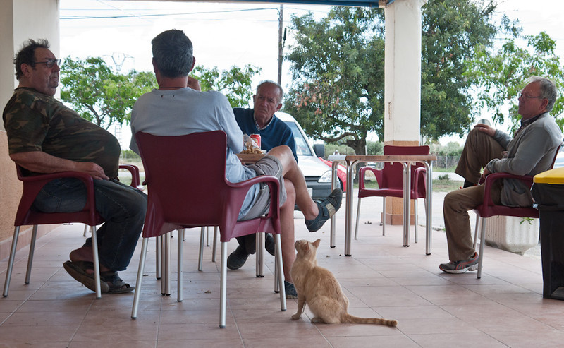 19 May 2013: a vignette of Spanish rural life. A small grocery near Elche, where the villagers meet to shoot the breeze, have a beer and feed the stray cats. It is exactly 26.5 km from my house, and I usually stop there for a Coke when out on a Sunday bicycle ride.