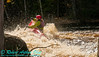 Open canoeist woman or OCW courageously negotiatng the major whitwater 'Meat' of Gilmores Mistake Rapids at 1400 frigid CFS or 25 inches on Section 3 of the wild Wolf River within Langlade County (USA WI White Lake; Obst FAV Photos 2013 Nikon D300s Daily Best Obst Image 5263)