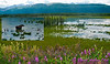 Following a Path from the Past - View from the historical Richardson Highway or Alaska Highway 4 of Moose grazing in backwaters of the Delta River Valley near Donnelly between Fairbanks and Paxson (USA Alaska Donnelly; Obst FAV Photos 2011 Nikon D300 Images 0486-0479-C)