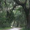 Road through the Canopy, Jekyll Island, Georgia