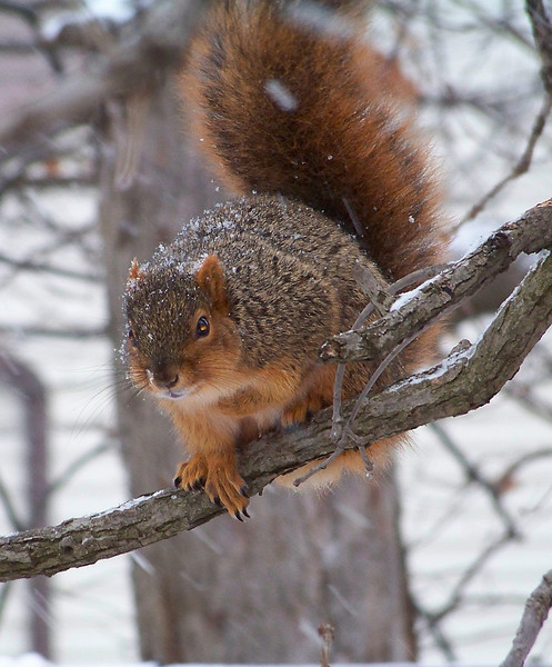 Hey Buddy, Can You Spare Some Nuts?