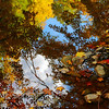 Magical Light and Water! <br /> October 10th, 2009 - Brilliant fall colors captured in a pool of water along the banks of the Vermilion River within 'Schoepfle Garden' in Birmingham, Ohio.  Part of the Lorain County Metroparks System. ------               © 2009 Paul L. Csizmadia / Spec3 Photography  All Rights Reserved  No Use Allowed without Permission