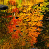 A Mirror on the Season! <br /> October 10th, 2009 - Brilliant fall colors captured in a pool of water along the banks of the Vermilion River within 'Schoepfle Garden' in Birmingham, Ohio.  Part of the Lorain County Metroparks System. ------               © 2009 Paul L. Csizmadia / Spec3 Photography  All Rights Reserved  No Use Allowed without Permission