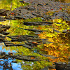 The Color of the Day! <br /> October 10th, 2009 - Brilliant fall colors reflected in pools of water along the banks of the Vermilion River within 'Schoepfle Garden' in Birmingham, Ohio.  Part of the Lorain County Metroparks System. ------               © 2009 Paul L. Csizmadia / Spec3 Photography  All Rights Reserved  No Use Allowed without Permission