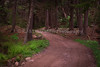 Trail Through Cathedral Woods, Monhegan Island Maine