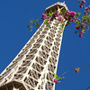 Flowering tree with Eiffel tower in the background, Las Vegas