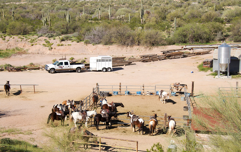 Horses at the Mammoth mine, Apache trail