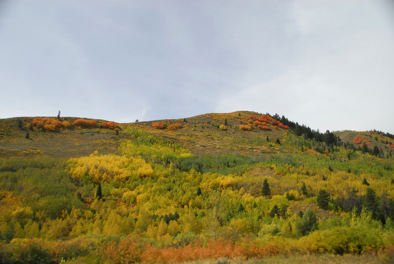 Fall color along the ID-WY border