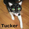 Casey and Tucker were adopted from the Cat House and Adoption Center on Saturday, April 13, 2013.<br /> <br /> Tucker<br /> <br /> Travels with Tucker.<br /> <br /> She came a long way to look for a home. This young lady has her bags packed and her passport handy. She has studied abroad and chose to live in the U.S.A. and would like very much to have a home of her own.