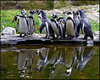 """PENGUIN CONVENTION"",Prague Zoo,Czech Republic."