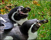 """PENGUINS IN LOVE 4"",Prague Zoo,Czech Republic."