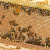 0822bees25