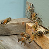 0822bees79