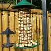 Peanut Bird Feeder-07212014-084928.jpg