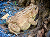 6-12-13- toad at the Caverns