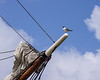 Gull on a Bowsprit