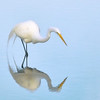 Great Egret in Reflection