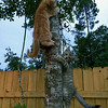 Mommy (Idris) took her babies to the tree for climbing lessons.  Pond and Yarr demonstrate.
