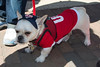 MLB: Apr 6 Phillies Pup Rally