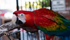 Parrot at The Perch 946