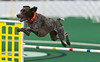 Joule_jumping in agility_2011