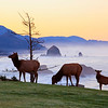 09 Feb 2011, Oregon, USA --- Elk at sunrise, Ecola State Park and Haystck Rock, Oregon Coast --- Image by © Craig Tuttle/Corbis