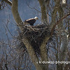 04.06.13 = Eagles nest in southeastern Ohio, along ST.RT 52 just east of Higgensport.
