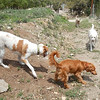 The pups enjoing a beautiful day_ Merle, Berkely, Louie and Biscuit