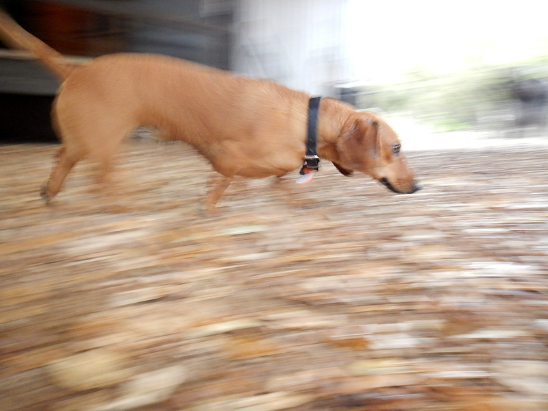 Sullivsn is a blur running by!
