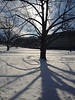 2013-02-22 - Backlit tree on the Ats Quad at Cornell