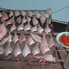303_Sokcho City  Fresh Seafood jpg