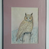 57 Long-eared Owl - color pencil, 14x10. $250