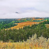 A Misty morning in the Cypress Hills, Saskatchewan