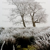 Trees in severe fog and frost