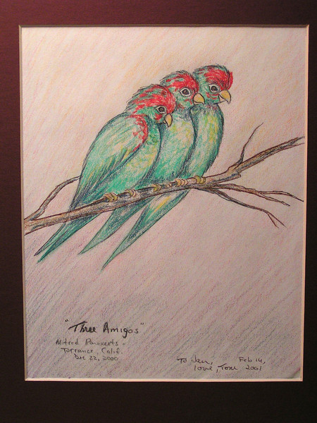 Three Amigos - Mitred Parakeets, Torrance, Calif, dec 22, 2000- feb 14, 2001, color pencil, 7 5x9 5