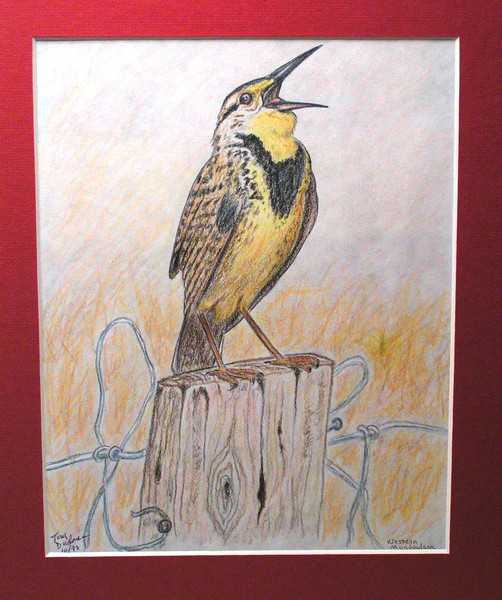Western Meadowlark, oct 1993, color pencil, 7 5x9 5