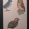 Three Arizona Birds, 1993, color pencil, 7 5x10