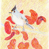 Tufted Titmouse, 9x12 color pencil, oct 7, 2013ss