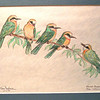 White-fronted Bee-eaters, oct 1993, color pencil, 9 5x7 5