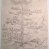 Pine Tree (sketch) dec 25, 1962, pencil, 8 5x11