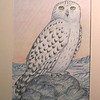 Snowy Owl, 1994, color pencil, 8 5x12 5