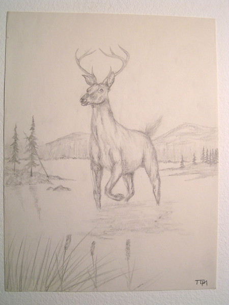 Whitetail, march 21, 1963, pencil, 8 5x11