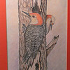 Red-bellied Woodpeckers, feb 1997, color pencil, 7x9 5