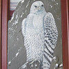 71  Gyrfalcon, White Phase, oil on natural slate with photo background, 20x9, NFS   CIMG8438s