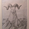 Mountain Sheep, may 9, 1964, pencil, 8x11